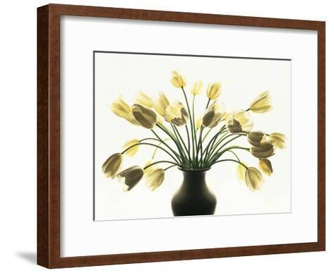 White Tulips-Kevin Summers-Framed Art Print