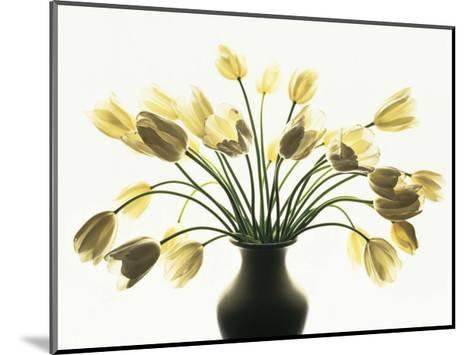 White Tulips-Kevin Summers-Mounted Art Print