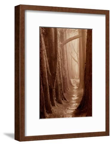 Cypress Trail-Paul Kozal-Framed Art Print