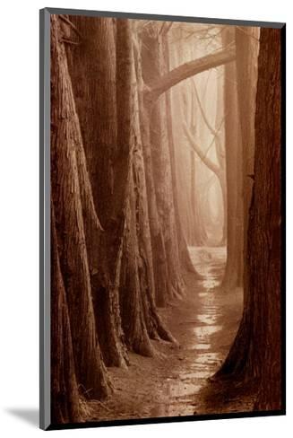 Cypress Trail-Paul Kozal-Mounted Art Print