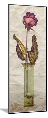 Rose in a Pot III-Giancarlo Riboli-Mounted Art Print