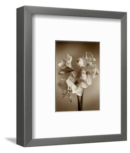 Amaryllis-Bill Philip-Framed Art Print