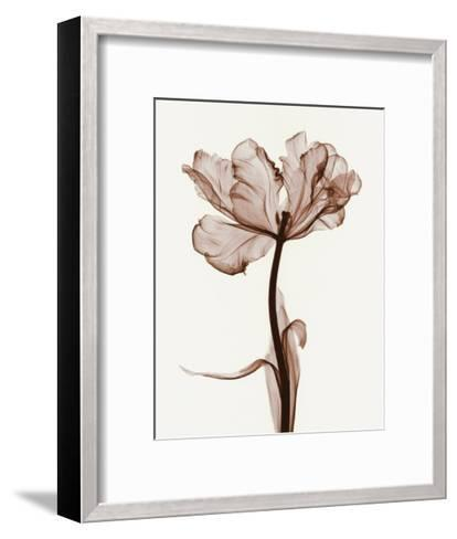 Parrot Tulips I-Steven N^ Meyers-Framed Art Print