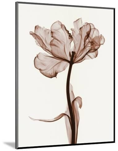 Parrot Tulips I-Steven N^ Meyers-Mounted Art Print
