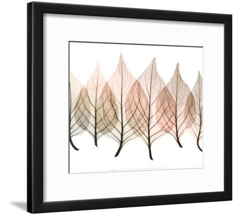 Celosias-Steven N^ Meyers-Framed Art Print