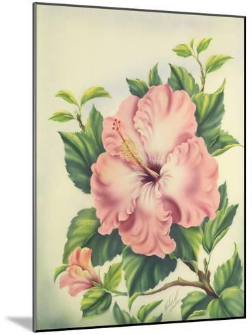 Hawaiian Pink Hibiscus, c.1940s-Ted Mundorff-Mounted Giclee Print