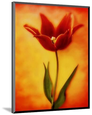 Tulip I-Christine Zalewski-Mounted Art Print