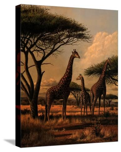 Giraffe Family-Clive Kay-Stretched Canvas Print
