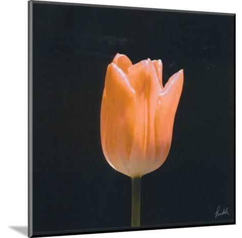 Tulip-Mitch Ostapchuk-Mounted Art Print