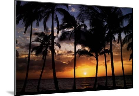 Relax: Palm Trees-Craig Tuttle-Mounted Art Print