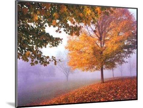 Autumn Mist-Mike Jones-Mounted Art Print