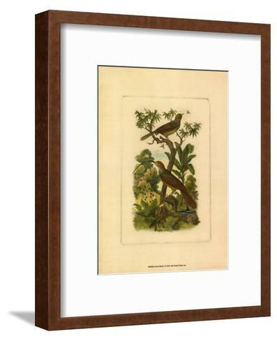 Exotic Birds I--Framed Art Print