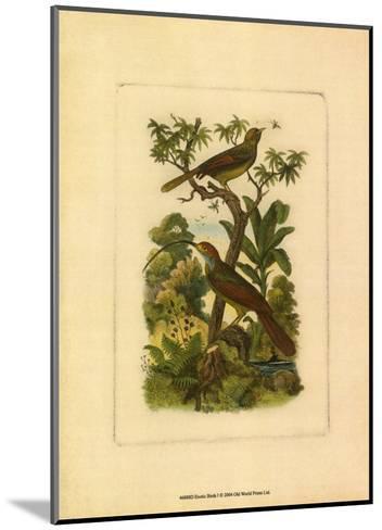 Exotic Birds I--Mounted Art Print
