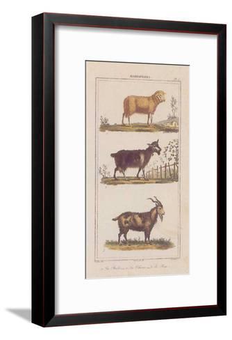 Brebis--Framed Art Print