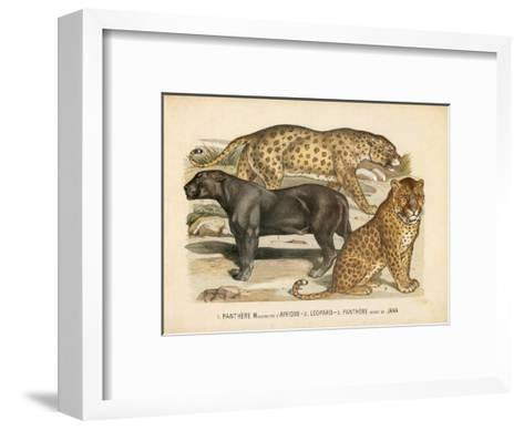 Animaux d'Afrique, Panthere--Framed Art Print