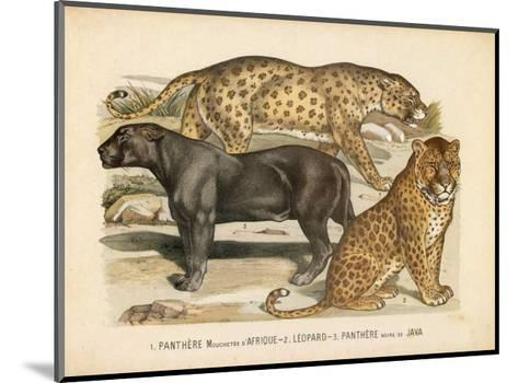 Animaux d'Afrique, Panthere--Mounted Art Print