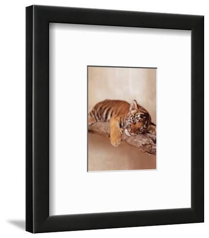 All Tiger-ed Out-Rachael Hale-Framed Art Print