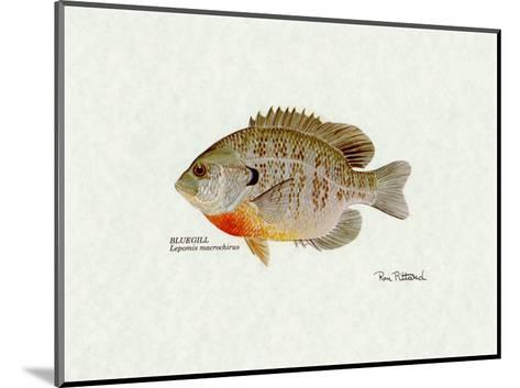 Bluegill Fish-Ron Pittard-Mounted Art Print