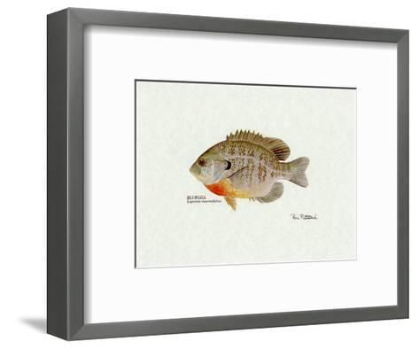 Bluegill Fish-Ron Pittard-Framed Art Print