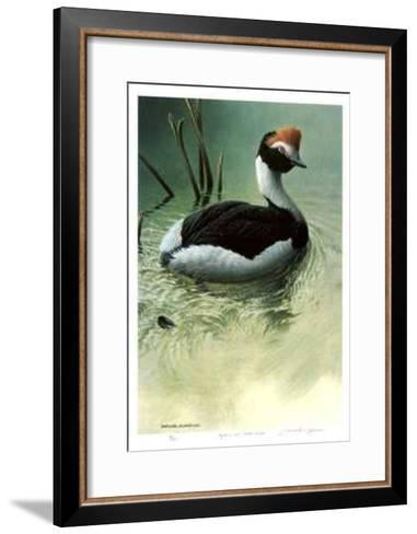 Highland Pool - Hooded Grebe-Michael Dumas-Framed Art Print