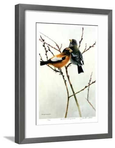 April Willow - Evening Grosbeak-Michael Dumas-Framed Art Print
