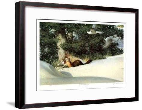 Martin and Grey Jays-Claudio D'Angelo-Framed Art Print