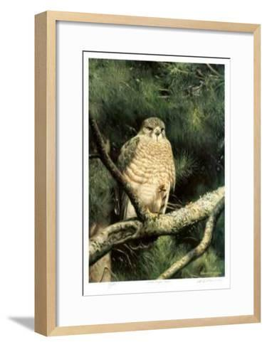 Broad Winged Hawk-Claudio D'Angelo-Framed Art Print