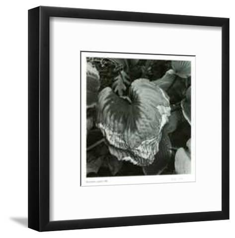 Untitled (dying leaf)-Morry Katz-Framed Art Print