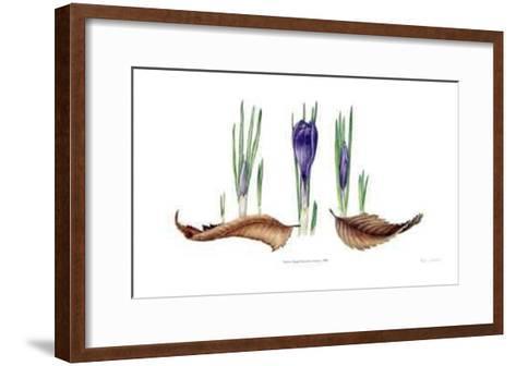Transitions; Crocus-Pamela Stagg-Framed Art Print