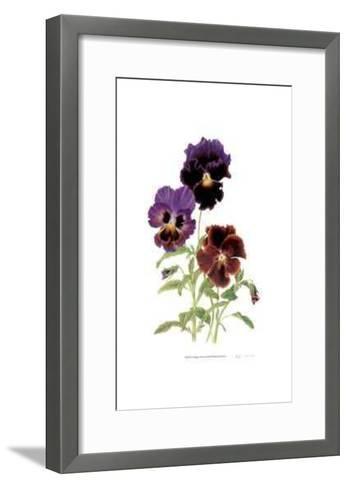 Swiss Giant Chalon Pansies-Pamela Stagg-Framed Art Print