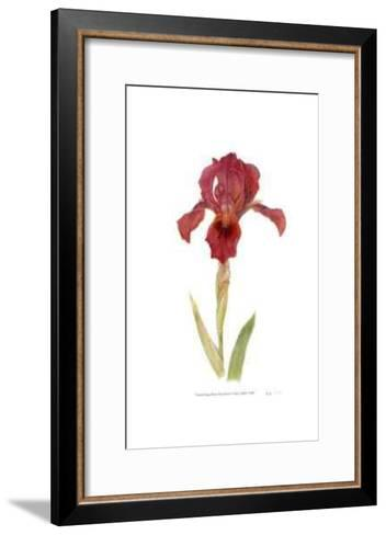 Dwarf Bearded Iris-Pamela Stagg-Framed Art Print