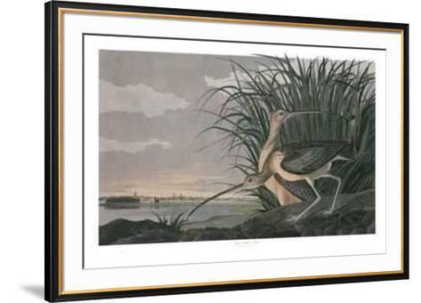 Long Billed Curlew-M. Bernard Loates-Framed Art Print
