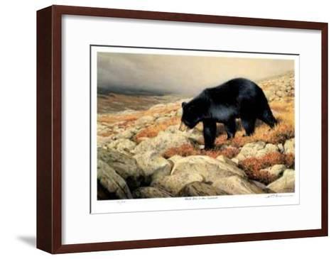 Black Bear in the Chickchocs-Claudio D'Angelo-Framed Art Print