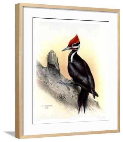 Pileated Woodpecker-James Fenwick Lansdowne-Framed Art Print