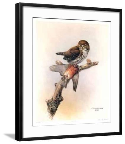 Pygmy Owl-James Fenwick Lansdowne-Framed Art Print