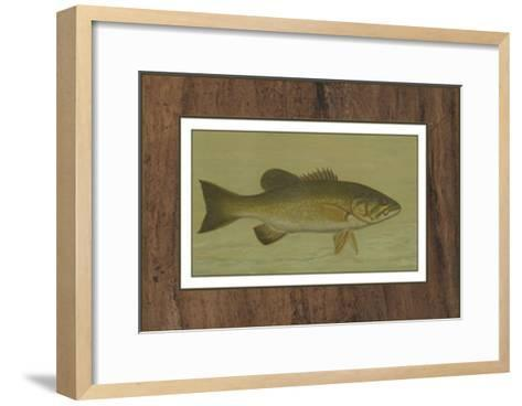 Small-Mouthed Black Bass-Harris-Framed Art Print