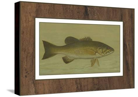 Small-Mouthed Black Bass-Harris-Stretched Canvas Print