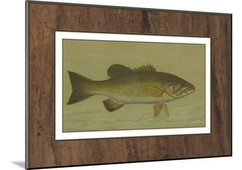 Small-Mouthed Black Bass-Harris-Mounted Art Print