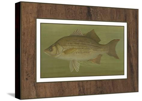 White or Silver Bass-Harris-Stretched Canvas Print
