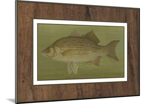White or Silver Bass-Harris-Mounted Art Print