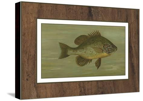 Common Sunfish-Harris-Stretched Canvas Print