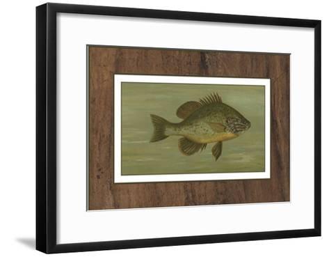 Common Sunfish-Harris-Framed Art Print