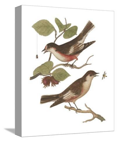 Antique Bird Pair I-James Bolton-Stretched Canvas Print
