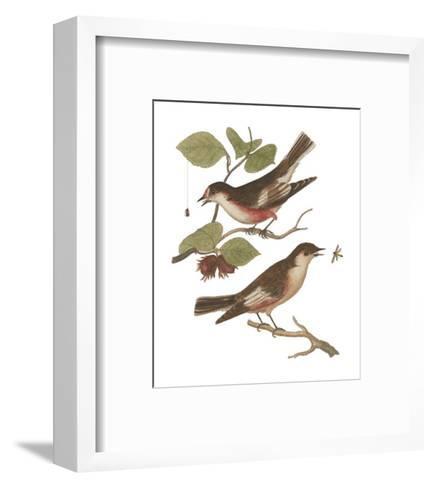 Antique Bird Pair I-James Bolton-Framed Art Print