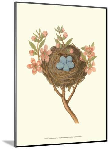Antique Bird's Nest I-James Bolton-Mounted Art Print