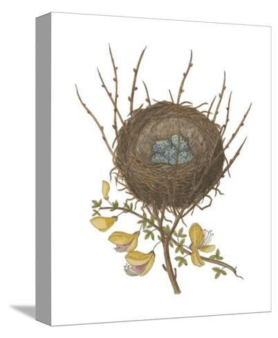 Antique Bird's Nest II-James Bolton-Stretched Canvas Print