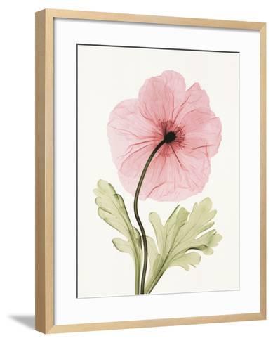 Iceland Poppy I-Steven N^ Meyers-Framed Art Print