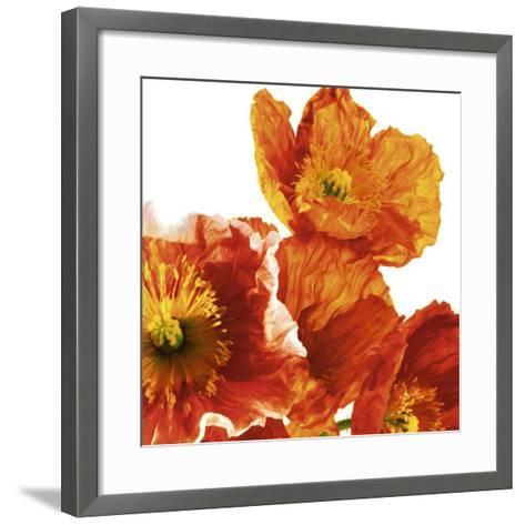Poppies II-Richard Weinstein-Framed Art Print