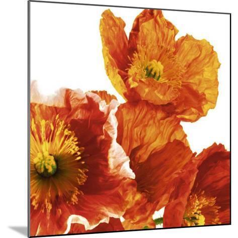 Poppies II-Richard Weinstein-Mounted Art Print