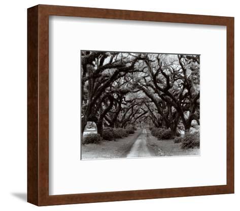Path in the Oaks II, Louisiana-Monte Nagler-Framed Art Print